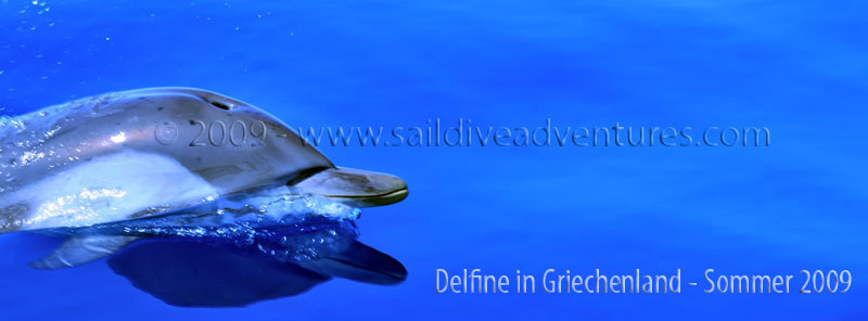 Delfine - Dr. Theodor Yemenis - Sail and Dive Adventures